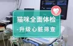 【安安宠医上海】猫咪全面体检-升级心脏筛查 猫咪