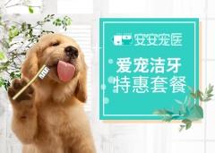 【安安宠医上海】10kg犬猫超声洁牙套餐 犬猫通用 0-10kg
