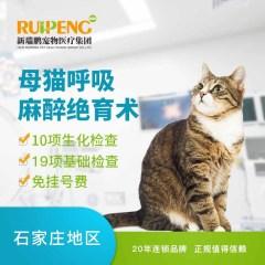 【新瑞鹏石家庄】母猫呼吸麻醉绝育术 母猫【呼吸麻醉】 母猫【呼吸麻醉】