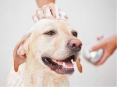 【成都】 洞子口专用 美毛护肤浴买8送4(犬) 狗狗 3-6kg
