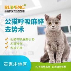 【新瑞鹏石家庄】公猫呼吸麻醉去势术 公猫【呼吸麻醉】 公猫【呼吸麻醉】