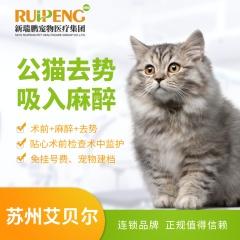 【苏州艾贝尔】公猫去势吸入麻醉 公猫去势吸入麻醉 0-5kg