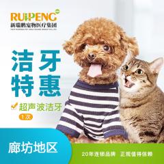 【新瑞鹏廊坊】犬猫超声洁牙套餐 犬猫通用 超声洁牙