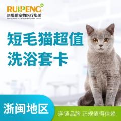 【杭州凯特喵】猫咪洗浴套卡 短毛猫精细洗浴3送1 2-5kg