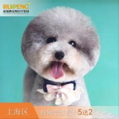 【阿闻上海】犬经典造型5送2套餐(高价版) 0-3kg