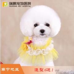 【瑞鹏南宁】犬萌系造型套卡6送1、10送2 犬萌系造型套卡6送1 W<3