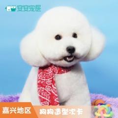 【嘉兴安安】小型犬造型3次卡 小型犬造型 6.1-0kg