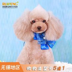 【无锡瑞鹏+安安+艾贝尔】新春犬造型卡(6次) 3-6kg