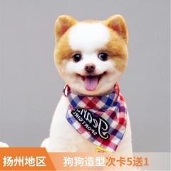 【扬州艾贝尔、宠颐生】新春犬造型6次卡 狗狗 0-3kg