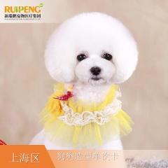 【阿闻上海】犬经典造型单次卡(市区版) W<3
