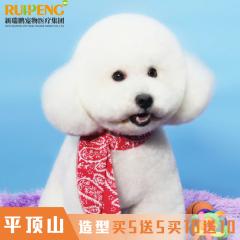 【平顶山新店】犬猫洗浴5送5,10送10 洗浴5送5 狗0-3kg