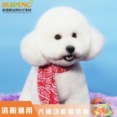 【洛阳区】 犬猫功能级洗浴买5送5 功能级洗浴买5送5 犬:0-3kg