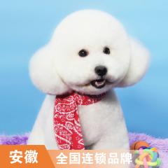 【安徽阿闻】犬抗菌止痒浴洗浴8次卡 3-6kg
