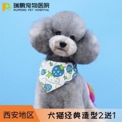 【西安】犬猫经典造型套卡 2送1 短毛猫0-2kg
