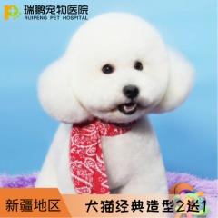 【新疆】犬猫经典造型套卡 2送1 犬:3-6kg