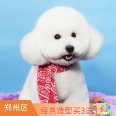 【郑州瑞鹏新店专属】犬/猫经典造型买3送3 犬猫经典造型买3送3 狗3-6kg