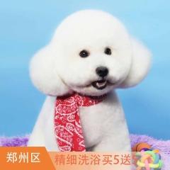 【郑州瑞鹏新店专属】犬/猫基础洗浴  买5送5 犬/猫基础洗浴买5送5 3-6kg狗狗