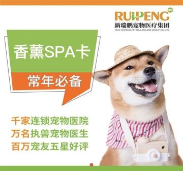 【无锡阿闻】香薰SPA5次6折卡 5-8kg短毛猫