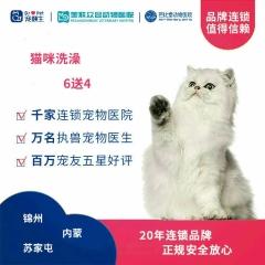 【新瑞鹏-东北区】锦苏内-猫咪洗澡次卡6送4 猫·长毛
