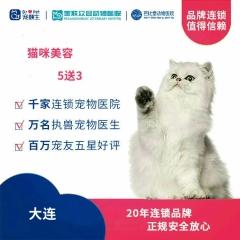 【新瑞鹏-东北区】大连-猫咪美容次卡5送3 短毛猫